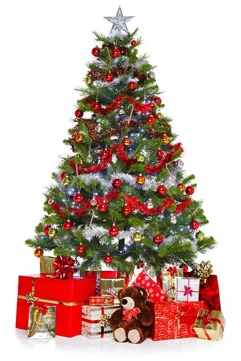 christmas tree and presents isolated on white photograph