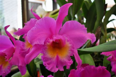 7 interesting facts about colombian orchids colombia 17 mejores im 225 genes sobre orquideas colombianas en