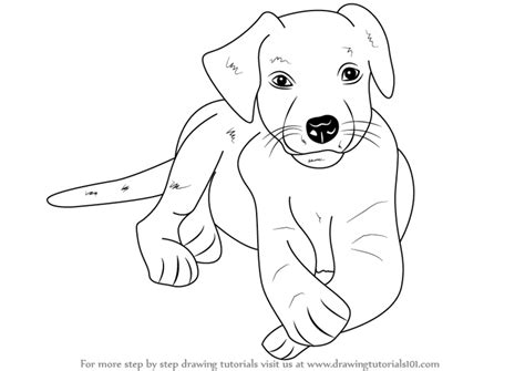 how to a lab puppy learn how to draw a labrador puppy farm animals step by step drawing tutorials
