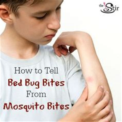 how to make bed bug bites stop itching 1000 images about pest control on pinterest bed bugs