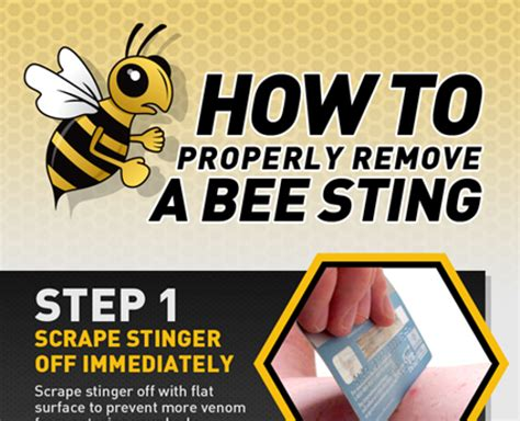 home remedies for bee stings hrfnd