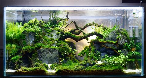 Aquascape 0 7 Co2 jasa setting aquascape bogor aquascape bogor