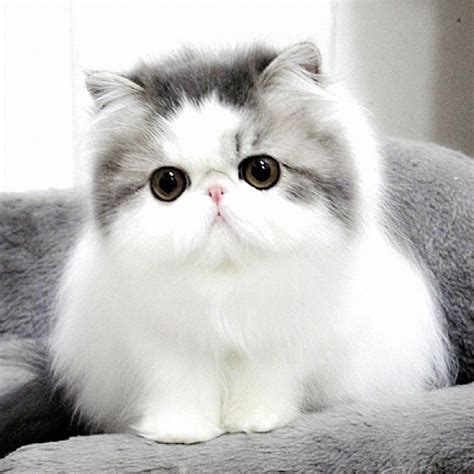beautiful kittens beautiful cat cute pictures to pin on pinterest pinsdaddy