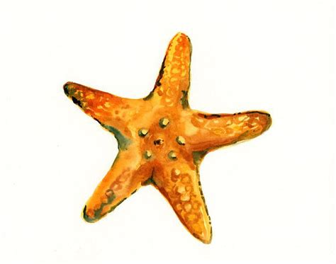 starfish colors starfish watercolor starfish watercolor random cool