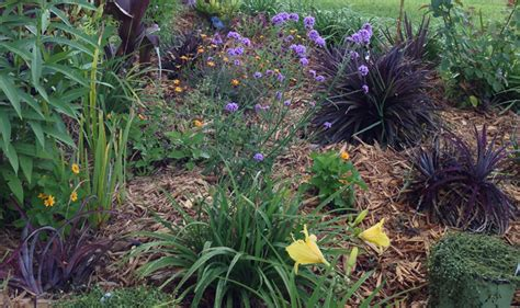 flower beds for beginners how to plant a flower garden