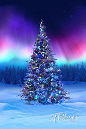 best christmas tree farms in aurora illinois northern lights tree p4366 643 borealis hoffman digital panel hingeley road quilting