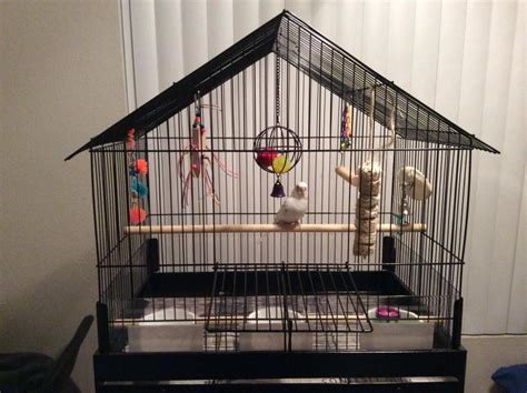 My Is A Cage Minimum Cage Size Parrot Forum Parrot Owner S Community