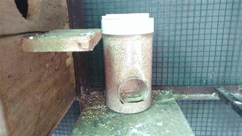 Tempat Makan Burung Dari memanfaatkan kaleng bekas untuk tempat makan burung