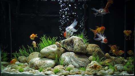 aquarium design sans entretien le site du poisson rouge 10 erreurs de d 233 butant avec un