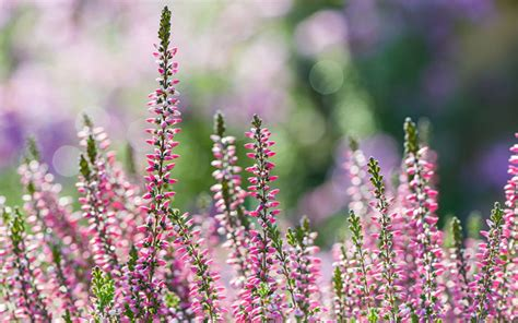 winter garden flowers the 21 best plants and flowers for winter garden colour
