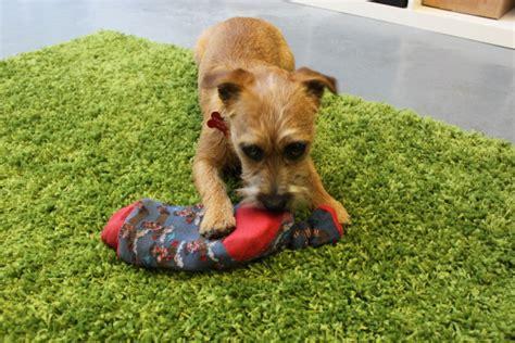 cani da casa giochi per cani fatti in casa dogbuddy
