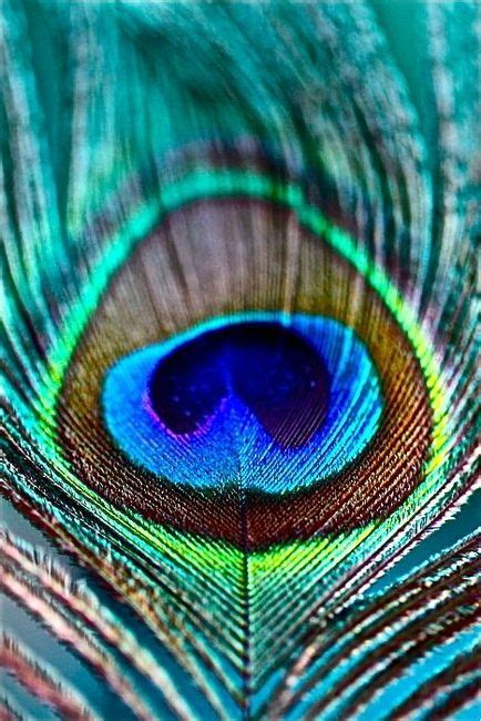 painting ideas pires adults peacock feather paint mask and eye designs