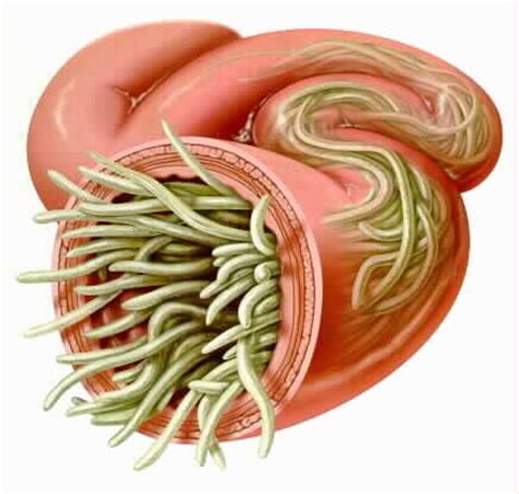 roundworm treatment for dogs intestinal parasites