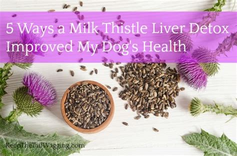 Liver Detox Foods For Dogs by 5 Ways A Milk Thistle Liver Detox Improved My S Health