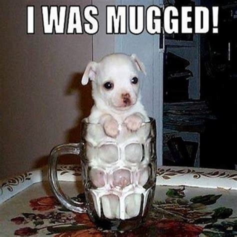 Really Funny Memes - funny dog faces memes www imgkid com the image kid has it