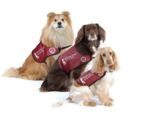 hearing dogs hearing dogs make a difference pet radio magazine