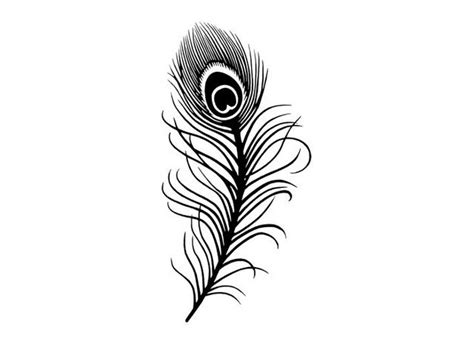 steven noble illustrations peacock feather