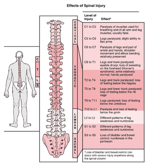 spinal cord injury diagram disability discussion page by joe