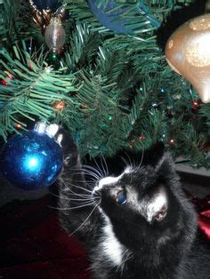 christmas tree oh christmas tree your ornaments are history o tree o tree your ornaments are history cat carol song meme