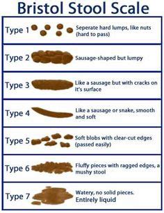 throw poop in a toilet house numbertwoguide 1000 images about toilet training on pinterest potty