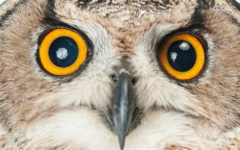 killer owl killer owls figured out doors all pets doomed