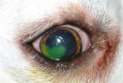 corneal ulcer corneal ulcer keratitis ulcerative