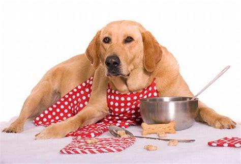 alimentazione animali domestici una breve storia degli alimenti commerciali per cani e