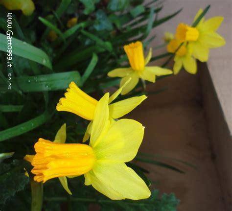 primi fiori di primavera cat primi fiori di primavera