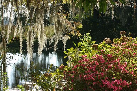 Magnolia Garden by Magnolia Plantation And Gardens