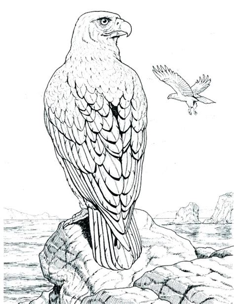 wildlife coloring pages wildlife colouring pages funycoloring