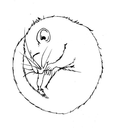 In Dormouse Drawing by Line Drawing Dormouse Search My Style