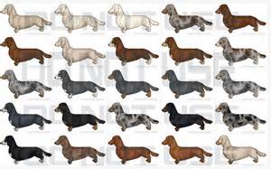 what colors do dogs see best daschund color palette design inspiration