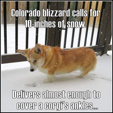 Funny Corgi Memes - 17 best ideas about corgi meme on pinterest funny