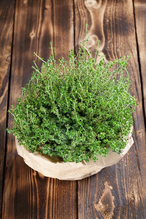 pianta da terrazzo best piante da terrazzo pieno sole images house design