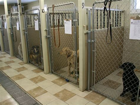 boarding a puppy 155 best images about boarding kennels on