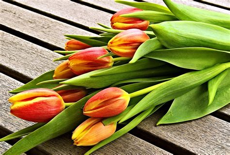free photo bouquet tulips red yellow free image on pixabay 2048652