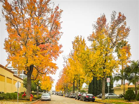 california fall color california fall color dude autumn happens here