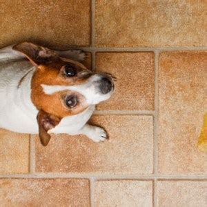 get dog to stop peeing in house are you really ready to adopt a dog 8 questions to ask yourself