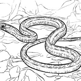 bull snake coloring page bull snake coloring page kids drawing and coloring pages