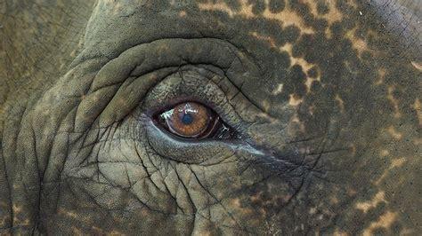 elephants   longer     circus  dream  animals