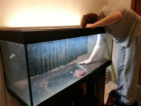 vasca per tartarughe grandi acquario per tartarughe d acqua accessori per acquario