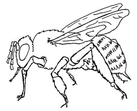 Free Coloring Pages Of Honey Bee Life Cycle Honey Bee Coloring Page
