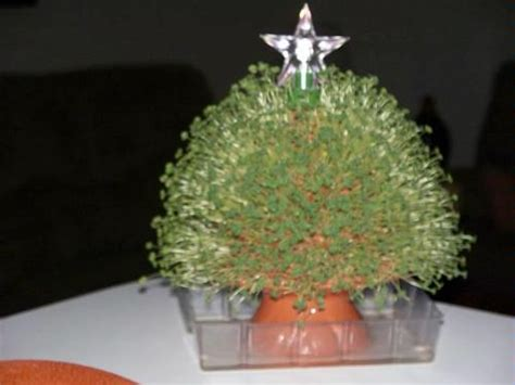 amazon com chia tree with star light tree plants