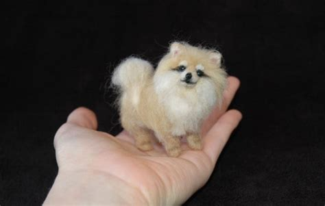 miniature teddy pomeranian puppies ooak needle felted baby pomeranian puppy teddy miniature by artist