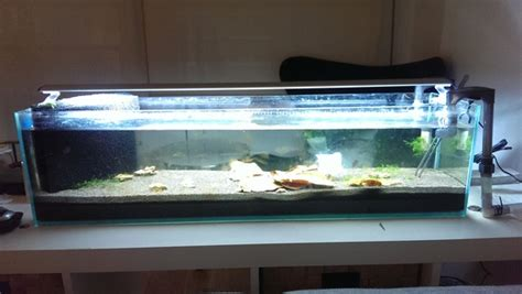 fs melb mr aqua 12g bookshelf tank boronia aquarium