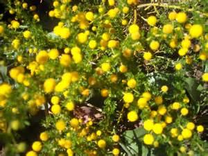 shrubs multiflora enterprises