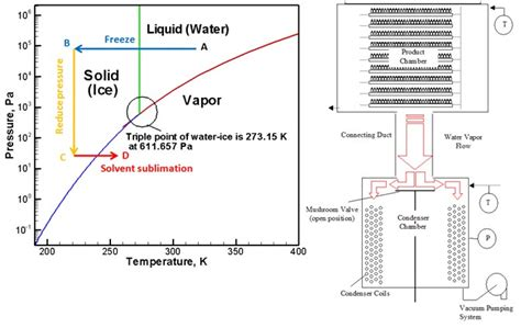 freeze drying phase diagram fluid dynamics of pharmaceutical freeze drying alexeenko research team