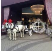 Cinderella Horse And Carriage Rental  Car Interior Design