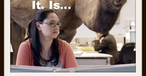 geico camel commercial hump day words on wheels uh oh guess what day it is