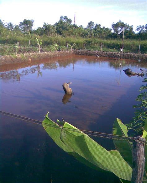 gallery kelinjau foto tambak ikan budidaya ikan nila ikan mas